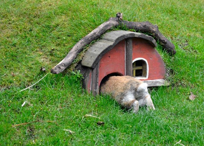 Kaninchen Tierpark Berlin