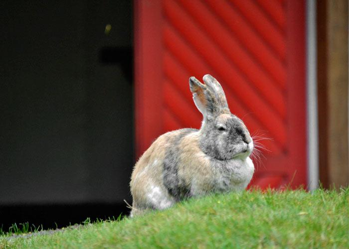 Kaninchen_im_Freien